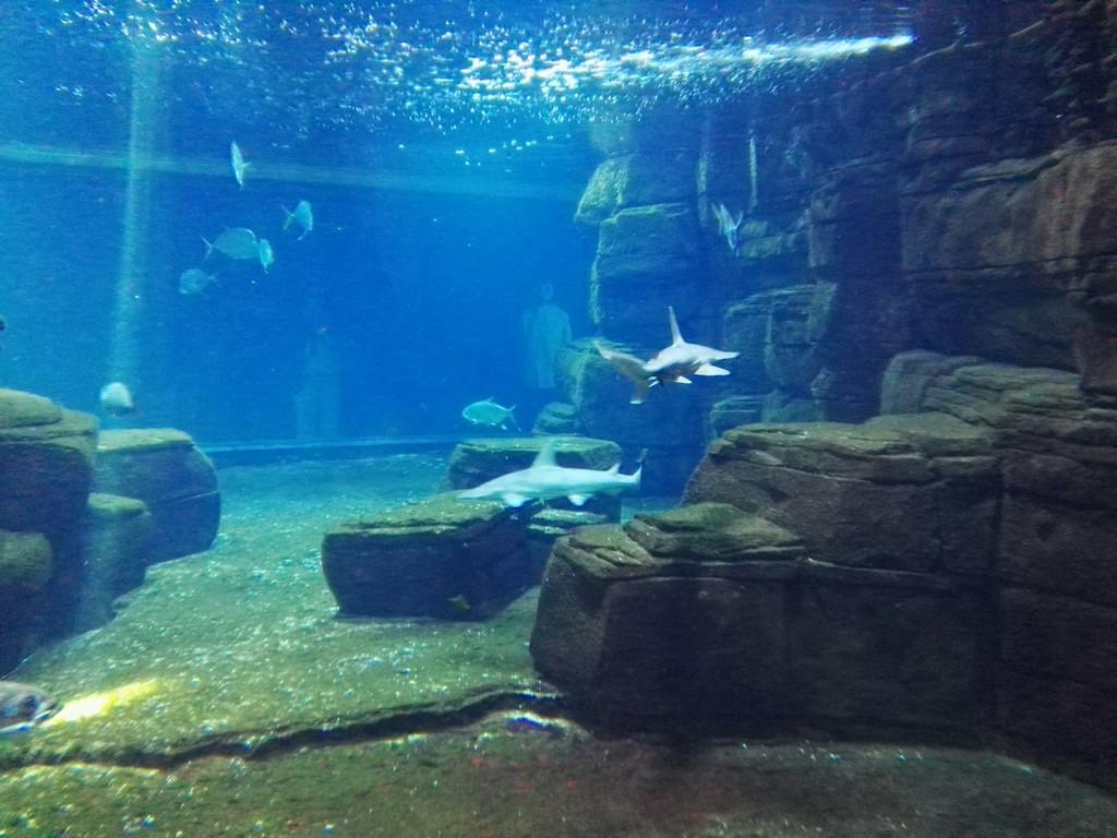 ein besuch im aquarium des berliner zoos underwater world. Black Bedroom Furniture Sets. Home Design Ideas