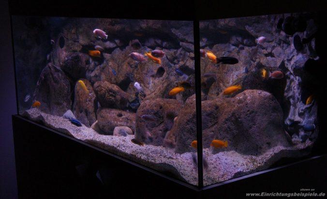 7 Fragen Die Du Vor Der Anschaffung Eines Malawi Aquariums